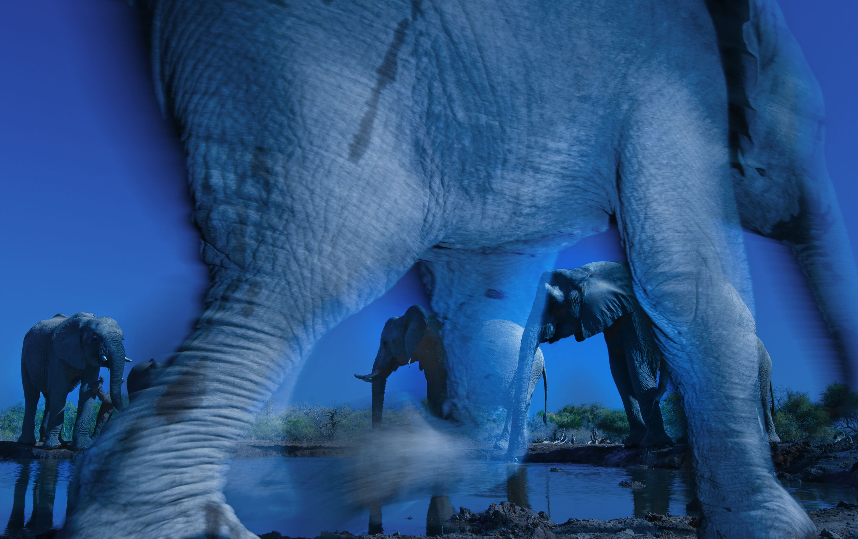 © Greg du Toit / Wildlife Photographer of the Year 2013